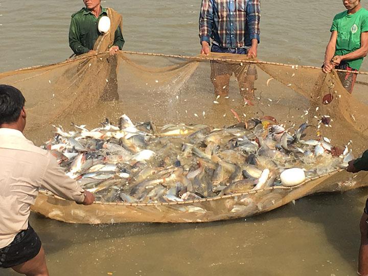 fishery copy