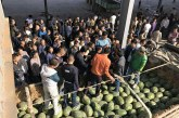 Supply glut at Muse gate brings down watermelon prices