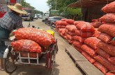 Kaleinaung town sees onion prices spike during harvest season