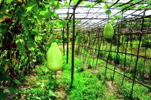 groud fruit