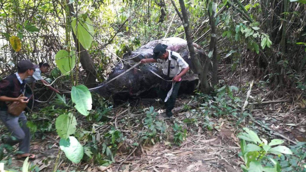 Elephant was found dead near Wardin Village, Pyigyimandaing Boakpyin Township. Photo: Myint Oo (Myeik)