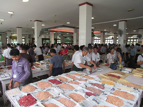Merchants evaluating various kinds of bean at a brokerage house in Mandalay. Photo: Min Htet Aung
