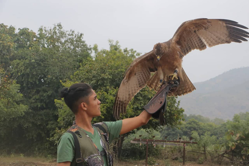 A falconer with his well-trained bird seen at the Myanmar Falconry Championship 2019 on 28 December at the Nature's Life Equestrian Club in Mandalay.Photo: Min Htet Aung (Man-Sub Printing House)