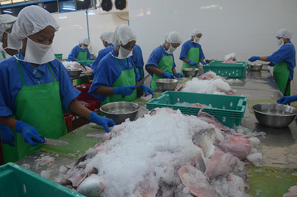 Workers work at a fish processing factory in Yangon. Photo: Phoe Khwar