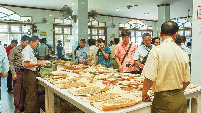 Merchants evaluate quality of pulses at the Mandalay wholesale market. Photo: Tin Zar Hlaing