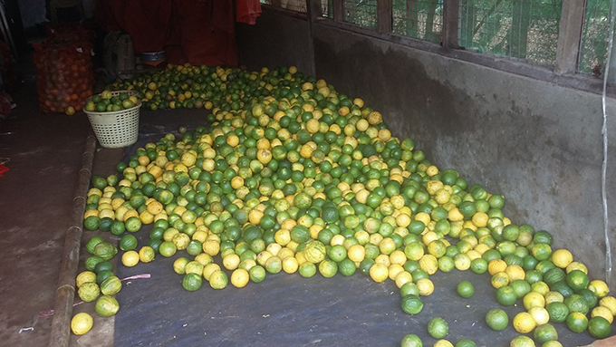 Fresh lemons in pile before being delivered to market stalls in Kya-in-seikkyi Township. Photo : Ko Myo (Zamimyat)
