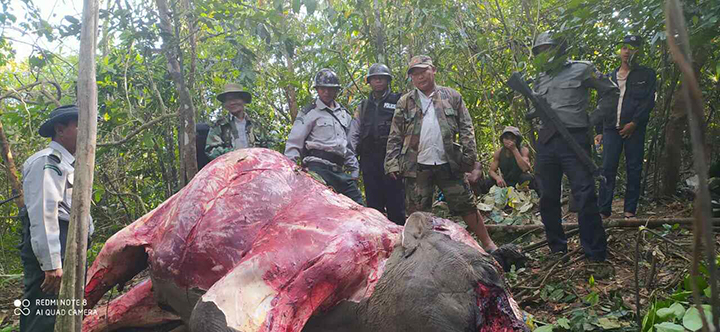 Officials inspecting the skinned elephant carcass in Nagpudaw on 24 January.Photo: Hla Min Htut (IPRD)