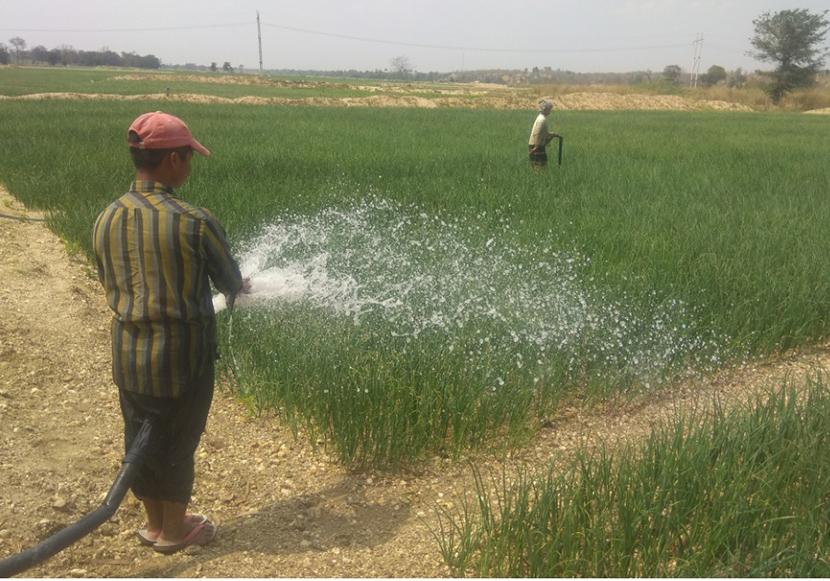 A farmer waters onion plants at a field in Seikphyu Township.Photo: Soe Lin Naing