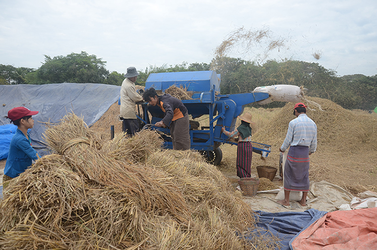 Farmers thresh rice with the help of a machine in a paddy field in Kangyidauk, Ayeyawady. Photo: Phoe Khwar