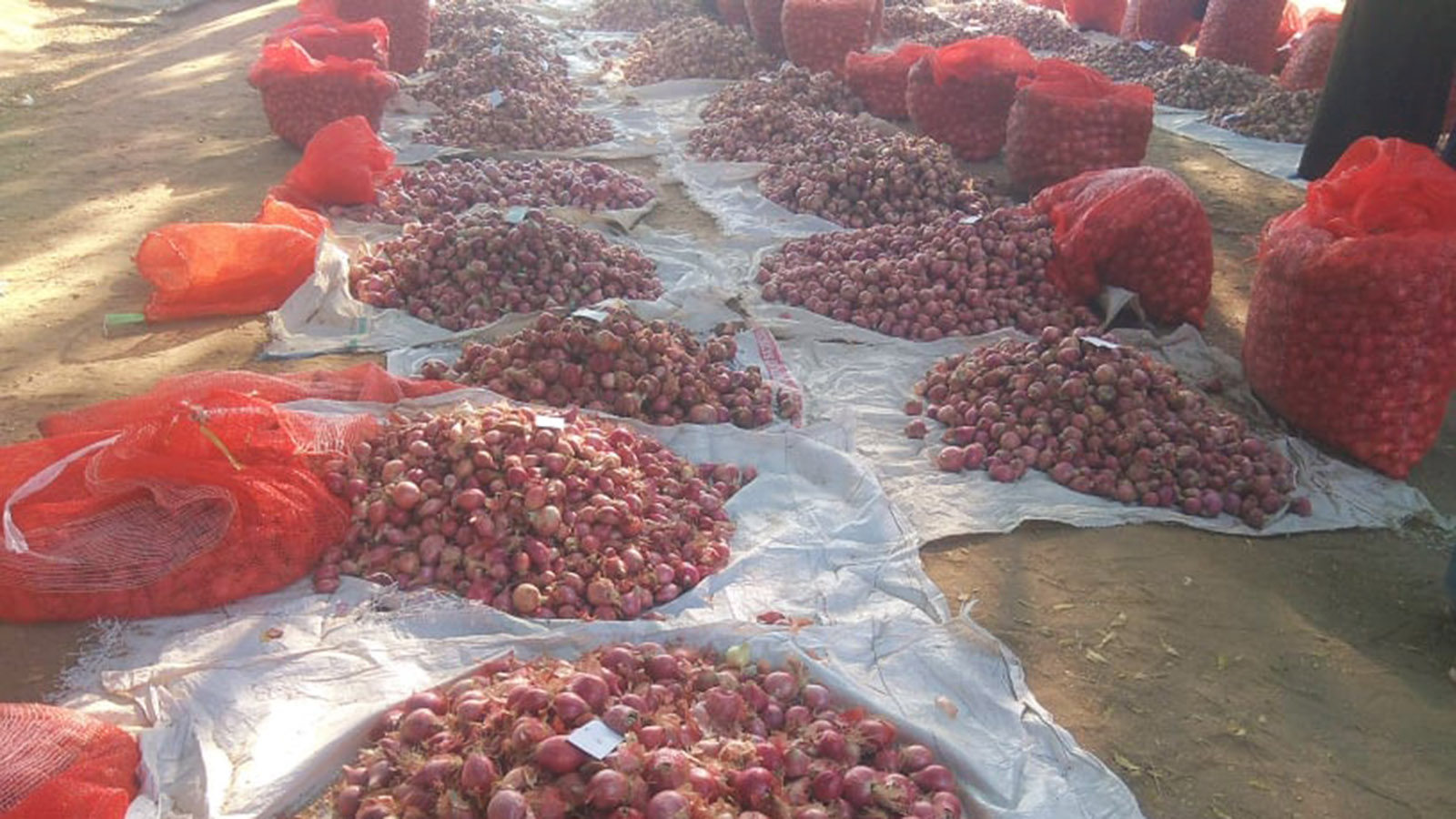 Photo shows onion being sold in the market. Photo: Soe Lin Naing (IPRD)