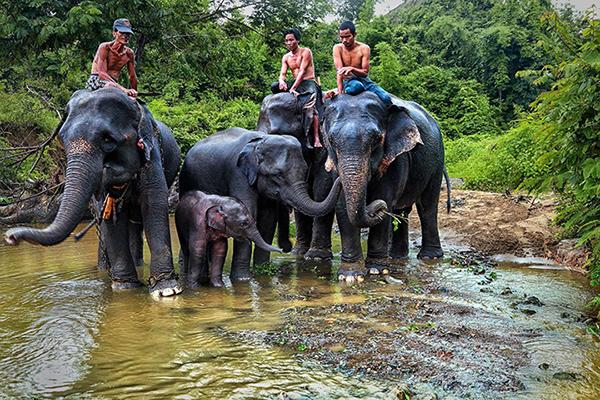 Mahouts seen cleaning elephants at the Winga Baw Elephant Camp near Yangon-Mandalay Highway.Photo: Thwe thwe tun