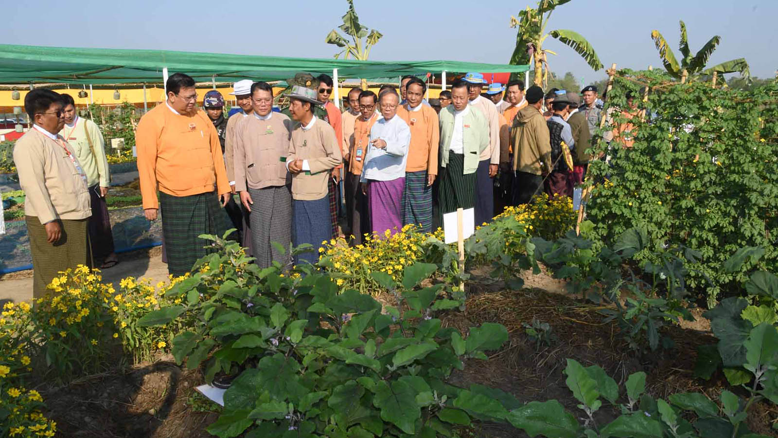 Officials led by Ayeyawady Region Chief Minister U Hla Moe Aung observe the plantation at the Agricultural Exhibition in Kangyidaung yesterday to mark Peasants Day. Photo: MNA