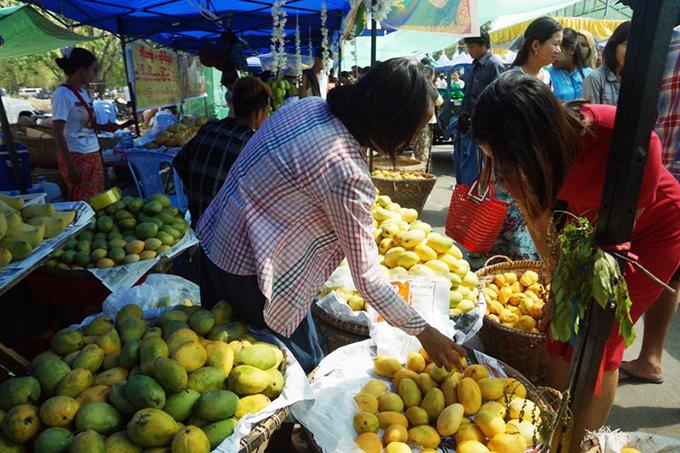 A shopkeeper selling mangoes in a bazaar in Mandalay. Photo: Than Zaw Min (IPRD)
