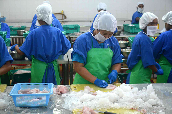 Workers work at a fish processing factory in Yangon.Photo : Phoe Khwar