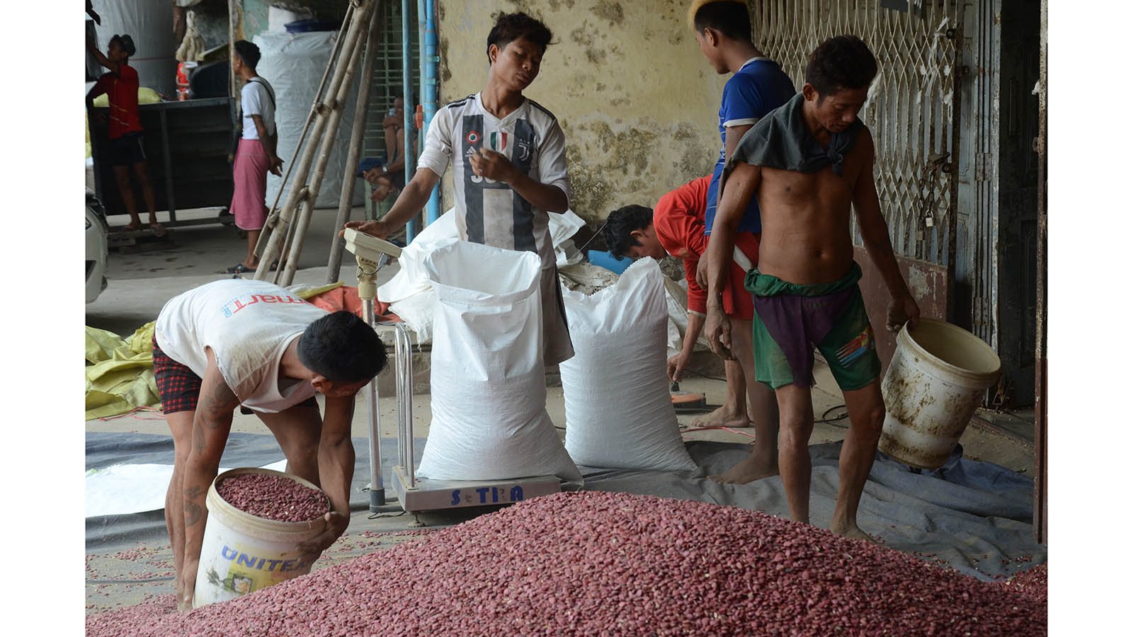 Workers weighing the beans in bags on a weighing scale. Photo: Phoe Khwar