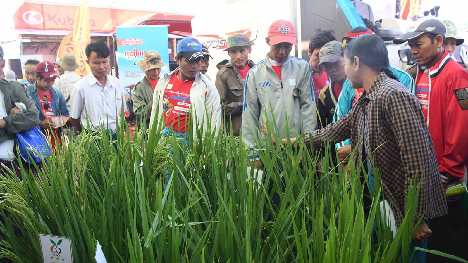 Locals observe the model paddy plantation at the celebration of Peasants Day 2020 in Wardu Village-tract of Ayeyawady Region.Photo: Nay Lin