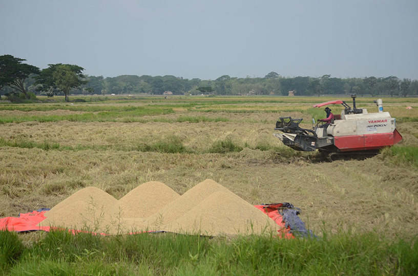 A farmer harvests rice with agri-machinery in Kangyidaung. file photo