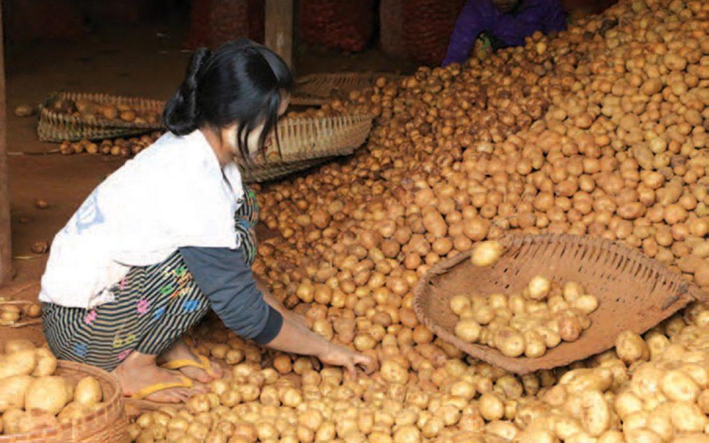 Potato 72 1024x640 1