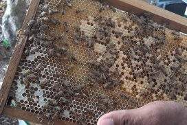 Myanmar honey relies more on local market as pandemic impacts export market