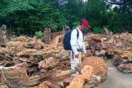 Nature lovers expect to have petrified Wood Park in Magway Region