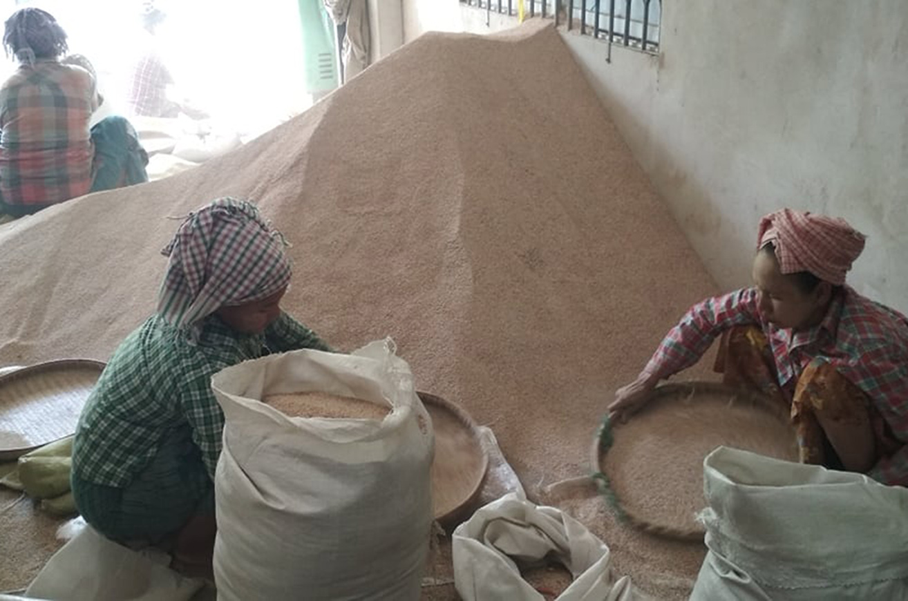 Myanmar exports 90 per cent of sesame production to foreign markets. Photo: Min Htet Aung