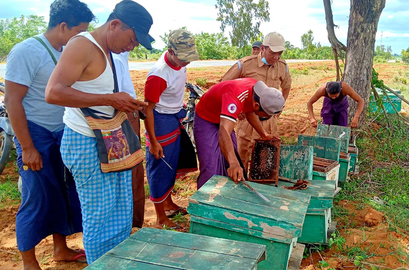 Bee breeding has been a popular business for the locals in Magway Region. PHOTO:  Zayyatu (Magway)