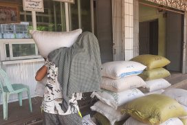 Magway sesame growers face hardship due to drought, low price