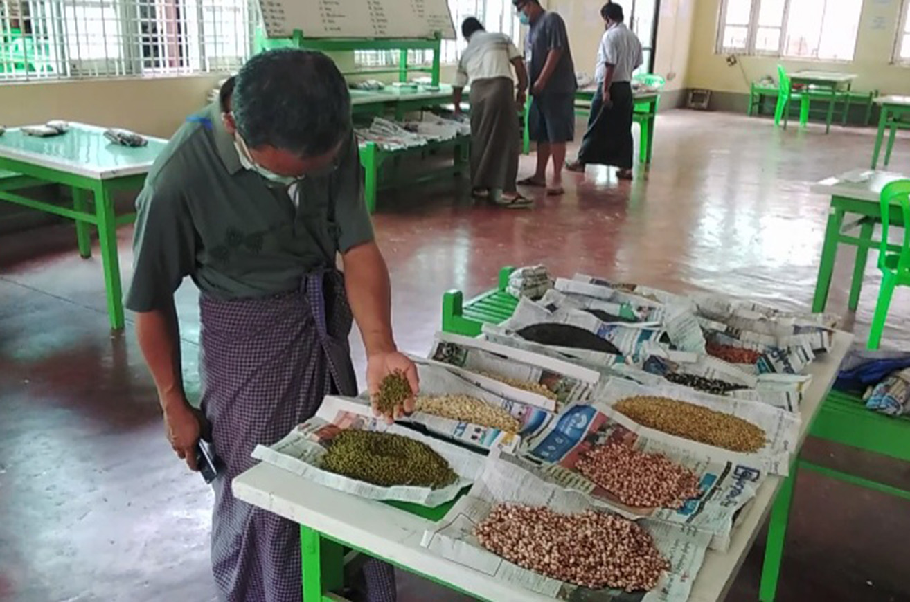 Prices of Myanmar beans and pulses have declined due to lesser demand from India amid the outbreak of COVID-19.  Photo: Myo Win Tun (Monywa)