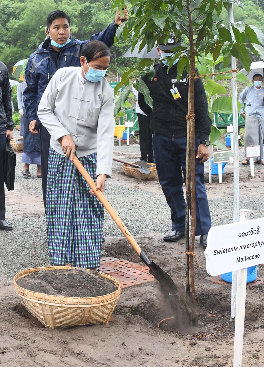 President U Win Myint is cultivating a Mahogany plant at monsoon plantation ceremony in Nay Pyi Taw on 6 August. PHOTO: MNA