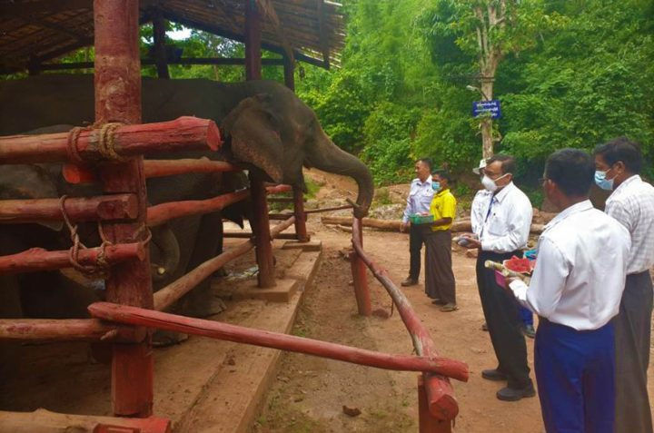 Union Minister U Ohn Win feeds the elephants at the Shan Yoma Elephant Camp in Kalaw on 2 August.Photo: MNA