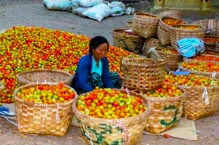 Photo Kyaw Kyaw Mahlaing 3 72