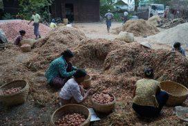 Onion stock still abundant in local market despite Bangladesh bulk buy