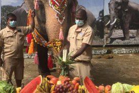 Yangon Zoo celebrates 67th birthday of Elephant Mo Mo