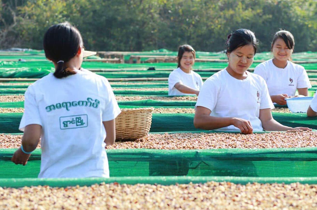 Production of Amara Coffee