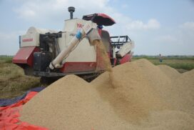 Price rises by around K600,000 per 100 baskets as monsoon paddy stock lessens