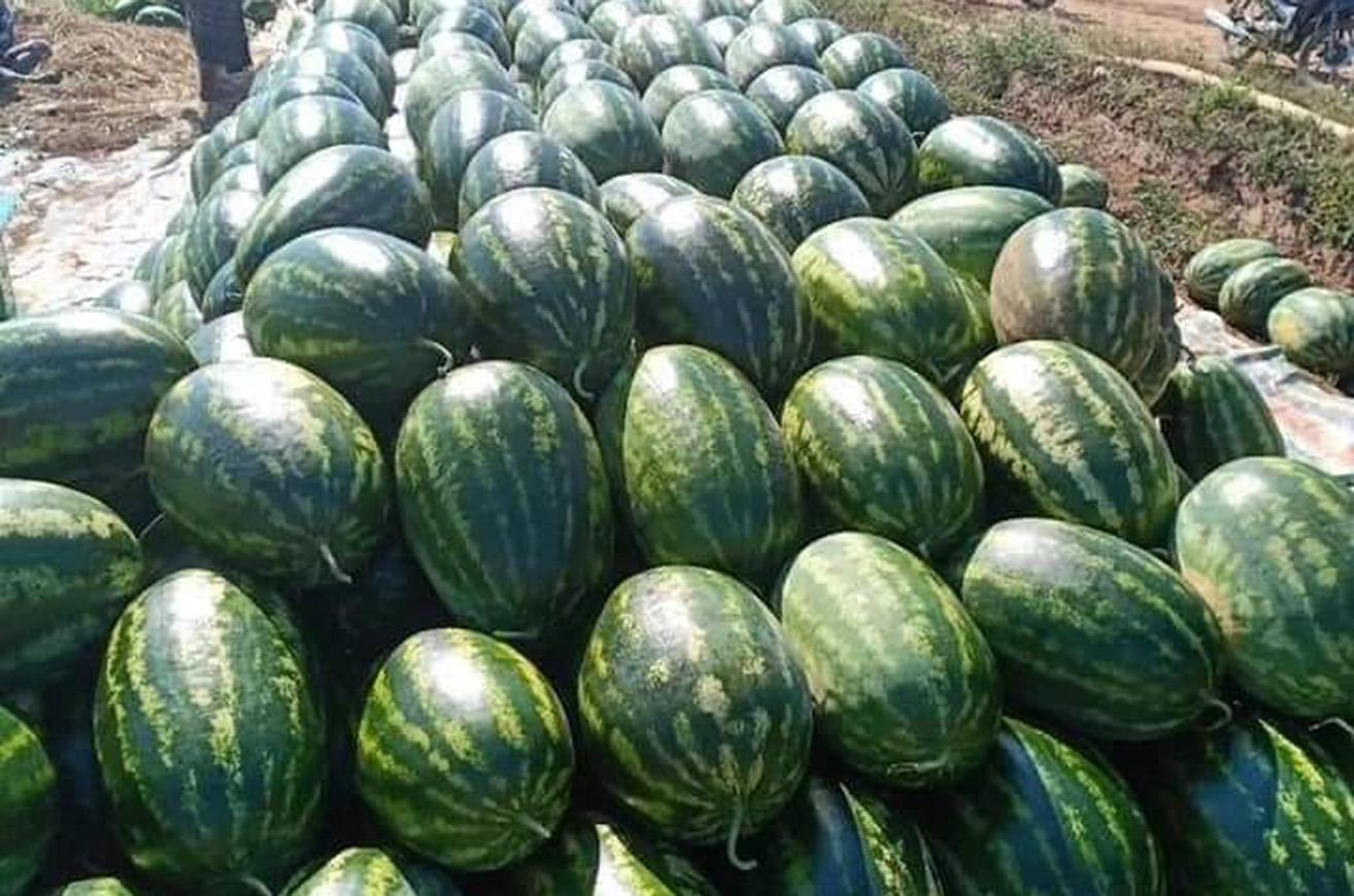 Watermelon 0