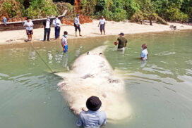 Whale found dead in water near Kyunsu Township