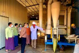 Magway region chief minister inspects sesame value chain