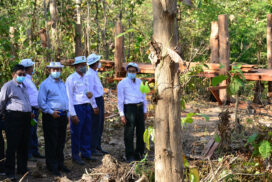 MoNREC minister inspects forest plantations, elephant sanctuary in Ngalaik Camp, Nay Pyi Taw