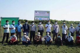 Mangroves planted on 18 hectares in Kawhmu by AFoCO