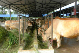 Taxes lost for country due to rampant illegal export market for cattle: MRCEA
