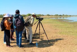 Numbers of migratory bird in Myanmar fall this year