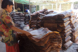 Illegal export of natural rubber to Thailand damages Myanmar's image: MRPPA reports