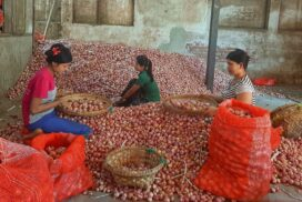 Suspended demand from China drives onion price down