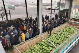 Price of watermelon exported to China keeps falling
