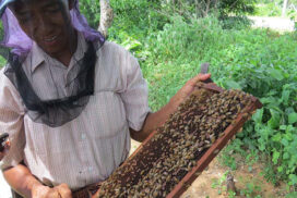 Myanmar to export 800 tonnes of honey to EU market this year