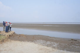 Agriculture with tidal irrigation in Bago to become travel destination