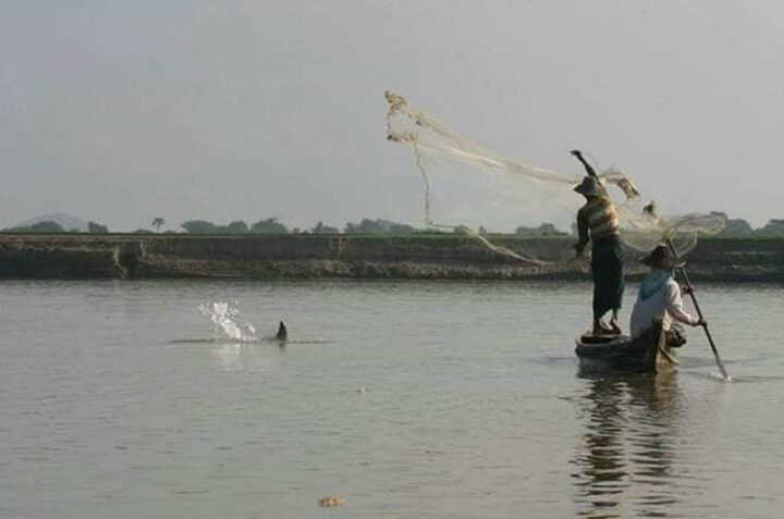 Fishermen catch fish in the Ayeyarwady River with the help of a dolphin. Photo GNLM 0