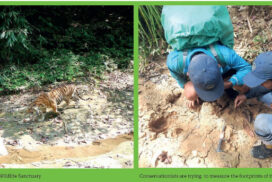 Tiger conservation survey conducted in Htamanthi wildlife sanctuary