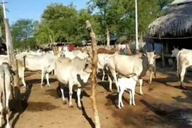 Wetlet locals earn family income from livestock farming